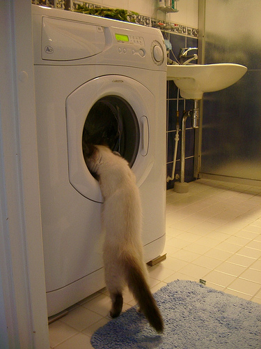 kitten-and-washing-machine