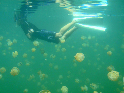 jeely-fish-jellyfish-israel-lebanon-photo